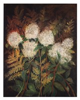 Hydrangeas and Ferns Fine-Art Print