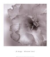 Blossom [Two] Fine-Art Print