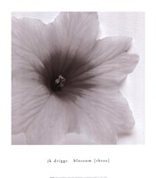 Blossom [Three] Fine-Art Print