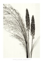 Broom Grass Fine-Art Print