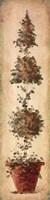 Tall Topiary II Fine-Art Print