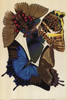 Collection I Fine-Art Print