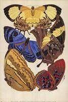 Collection IV Fine-Art Print