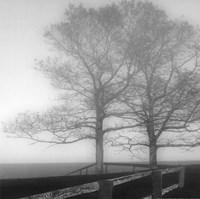 Seaside Tree Fine-Art Print