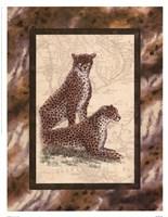 Cheetahs Fine-Art Print
