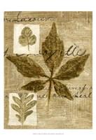Leaf Collage III Fine-Art Print