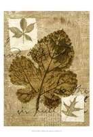 Leaf Collage IV Fine-Art Print