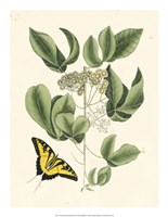Butterfly and Botanical II Fine-Art Print