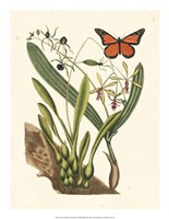 Butterfly and Botanical IV Fine-Art Print