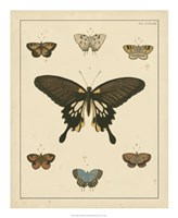 Heirloom Butterflies I Fine-Art Print
