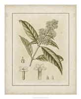 Tinted Botanical II Fine-Art Print