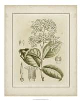Tinted Botanical III Fine-Art Print