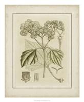 Tinted Botanical IV Fine-Art Print