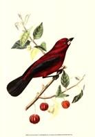 Cuvier Exotic Birds V Fine-Art Print