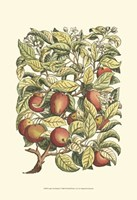 Apple Tree Branch Fine-Art Print