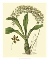 Antique Orchid Study IV Fine-Art Print