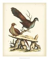 Regal Pheasants I Fine-Art Print