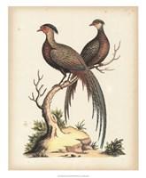 Regal Pheasants II Fine-Art Print