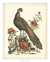 Regal Pheasants III Fine-Art Print