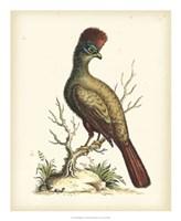 Regal Pheasants IV Fine-Art Print