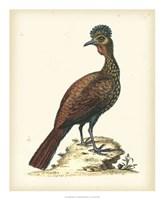 Regal Pheasants V Fine-Art Print