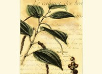 Black Pepper Fine-Art Print