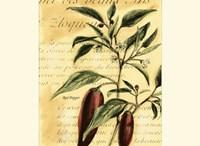 Red Pepper Fine-Art Print