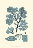 Azure Seaweed I Fine-Art Print