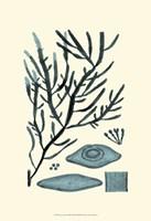 Azure Seaweed III Fine-Art Print