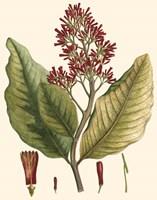 Crimson Botanical II Fine-Art Print