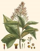 Crimson Botanical III Fine-Art Print