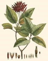 Crimson Botanical IV Fine-Art Print