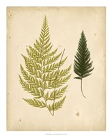 Cottage Ferns I Fine-Art Print