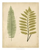 Cottage Ferns II Fine-Art Print
