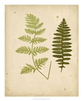 Cottage Ferns III Fine-Art Print
