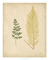 Cottage Ferns IV Fine-Art Print
