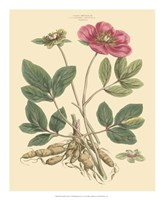 Blushing Pink Florals I Fine-Art Print
