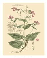 Blushing Pink Florals VII Fine-Art Print