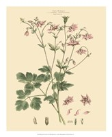 Blushing Pink Florals IX Fine-Art Print