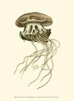 Creatures of the Sea I Fine-Art Print