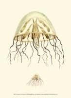 Creatures of the Sea III Fine-Art Print