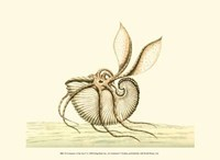 Creatures of the Sea V Fine-Art Print