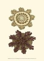 Jewels of the Sea VI Fine-Art Print