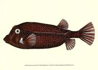 Antique Fish IV Fine-Art Print