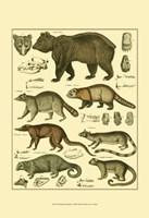 Bear & Racoon Fine-Art Print