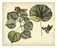 Antique Mangrove Tree Fine-Art Print