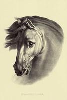 Equestrian Portrait I Fine-Art Print