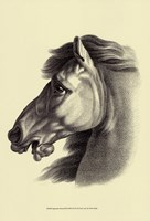 Equestrian Portrait III Fine-Art Print