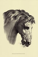 Equestrian Portrait IV Fine-Art Print