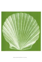 Saturated Shells II Fine-Art Print